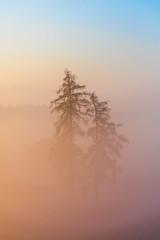 Bäume im Nebel (explored) (louhma) Tags: bäume nebel natur d750 nikon morgens februar 2017 sonnenaufgang countryside bavaria deutschlang germany traxl explore explored