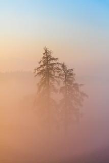 Bäume im Nebel (explored)