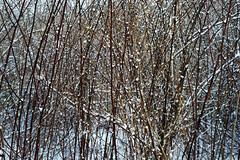 Vertical (jswigal) Tags: columbus ohio park nature snow spring winter season seasons osu prairie oak oaks metro outdoors outside intimate landscape tree plant grass white grey blue red green orange cool sony alpha a7r a7 ilce minolta rokkor