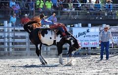 P3110127 (David W. Burrows) Tags: cowboys cowgirls horses cattle bullriding saddlebronc cowboy boots ranch florida ranching children girls boys hats clown bullfighters bullfighting