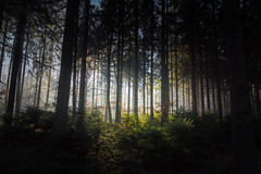 Distant Light (Petr Sýkora) Tags: les zima forest light darkness trees thought distant czech