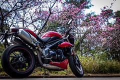 IMG_2420 (HoragamePhoto) Tags: sakura speedtriple