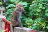 20170313Monkeys-04 (wang_6834) Tags: 猴子