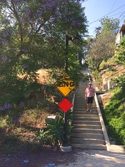 IMG_1469 (lnewman333) Tags: ca usa sign losangeles socal end southerncalifornia echopark photostream jacarandatree secretstairs iphone5s