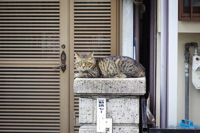 Today's Cat@2014-06-28