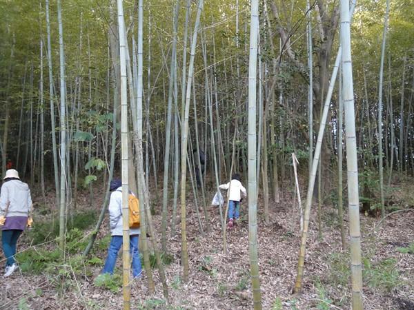 竹林の中に入っていきたけのこを探します。|大高緑地