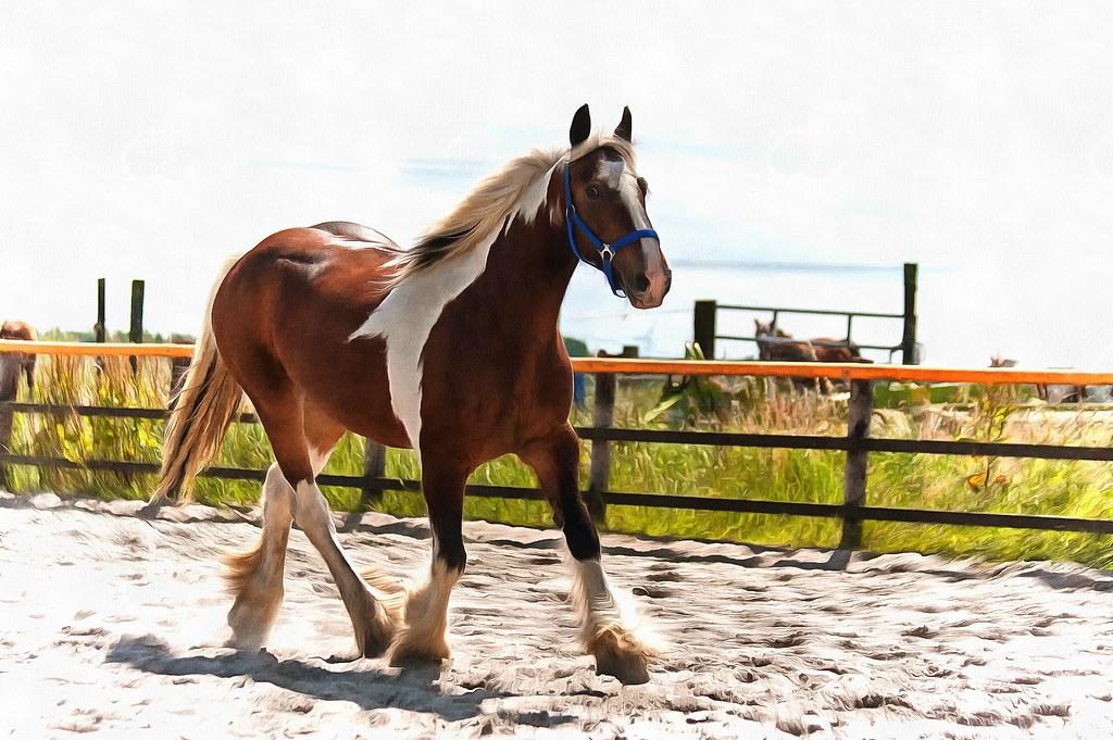 horse xxx livekamera helsinki