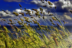 from the high grass (Hal Halli....happy everything!!) Tags: ocean sea sky beach grass waterfront bluesky magicalmoments