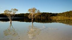 Reflections (scatrd) Tags: landscape travels nikon australia unescoworldheritagesite worldheritagesite qld queensland fraserisland eastcoast worldheritage 2014 landscapephotography kgari eastcoastofaustralia d800e nikond800e lakeboorangoora jasonbruth