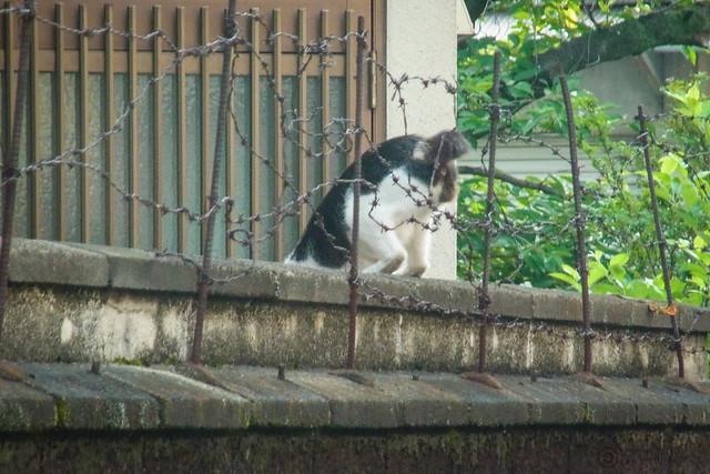 Today's Cat@2014-07-08