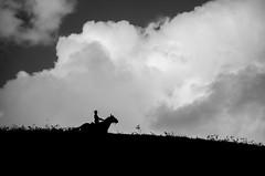 Paladino Menino / Paladin Boy (Hélder Santana) Tags: paladino menino paladinomenino paladin boy paladinboy nuvens cloud escuro dark contraste contrast lowkey natural light luz naturallight luznatural preto pretoebranco black blackandwhite negro cinza gray héldersantana heldersantana santana d7000 nikon nikond7000 d7k portfolio brasil brazil passira pe pernambuco cavalo horse male portrait paisagem landscape mistério mystery mysterious misterioso misterio lucassanttana 18105 nikkor zoom contraluz backlight silhueta silhouette day dia nublado cloudy sunlight daylight sky céu ceu vento wind horizonte horizon firmamento firmament clouds nuvem hdsantana
