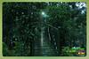 Silent Valley---------------30 (Binoy Marickal) Tags: india green tourism nature water rain kerala mala palakkad evergreenforest treaking silentvalleynationalpark nilgirihills mannarkkad mukkali kuzhur indiabinoymarickal