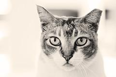aIMG_9583c (pongo_c) Tags: blackandwhite macro cat singapore hdb feral