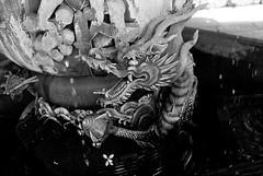 dragon fountain (troutfactory) Tags: blackandwhite bw film fountain monochrome japan temple dragon rangefinder  analogue nara kansai todaiji    nigatsudo  50mmnokton  fujipresto400 voigtlanderbessat