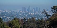Downtown View - Griffith Park - Los Angeles - California - 03 July 2014 (goatlockerguns) Tags: california park city usa west nature coast losangeles downtown natural unitedstatesofamerica trails observatory socal hollywood griffith