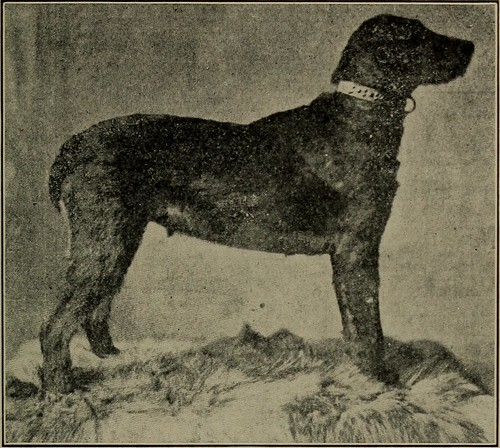 """Image from page 238 of """"Dogs of all nations. In prose and rhyme"""" (1903)"""