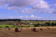 Mill Farm View (AndyorDij) Tags: empingham england rutland uk 2014 bales harvest trees tree fields field summer andrewdejardin
