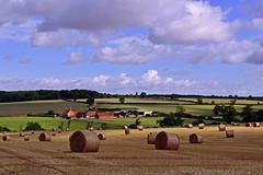Mill Farm View (AndyorDij) Tags: uk trees summer england tree field harvest fields rutland bales 2014 empingham