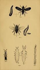 Anglų lietuvių žodynas. Žodis phylloxerae reiškia <li>phylloxerae</li> lietuviškai.