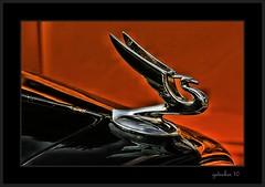 Hood Ornament (the Gallopping Geezer 2.1 million + views....) Tags: auto park classic car canon vintage automobile shiny paint display antique michigan ornament fender chrome hotrod hood woodward custom carshow royaloak geezer 2010 corel dreamcruise