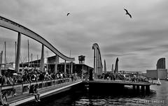 Barcelona (ChiaraCocchiphotography) Tags: barcelona voyage city trip sea bw tourism birds architecture modern port canon blackwhite curves journey portvell eos70d