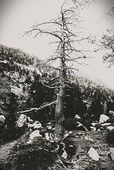 Lifeless (jacobo_gonzalez_castrodeza) Tags: bw tree nature contrast blackwhite nikon contraste jacobo 18mm d80 blackwhitephotos
