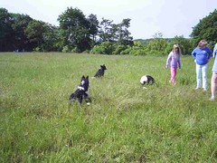 mot-2005-berny-riviere-087-le-drive-dog-training-area_800x600