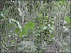 3220927062_1cbf203ef8_o (gray.florie) Tags: allrightsreserved usewithoutpermissionisillegal ©2009florencetomasulogray florencegray floriegrayflorencetomasulograytomasulofloriegrayfloriegraycom
