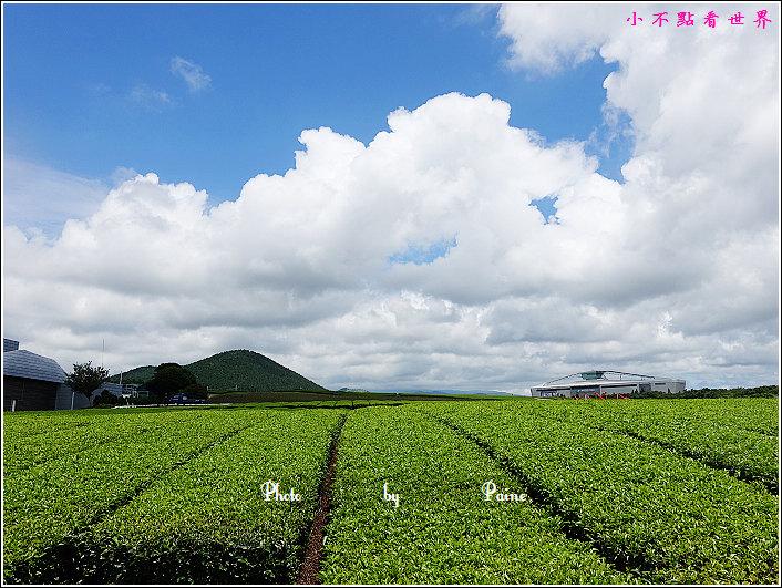 濟州島innisfree館 綠茶博物館 (61).JPG