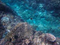 20149/AkashimaOkinawa (mariko_en) Tags: snorkeling akajima akaisland