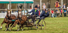 Carriage drivers pull a tight turn at the Royal Berkshire Show (Anguskirk) Tags: uk england horses farming eu competition berkshire agricultural newburyshow showground carriagedrivers royalcountyofberkshireshow topazremask