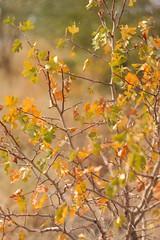 fall (Vladi_L) Tags: autumn fall nature leafs nx nx300