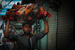Chickens to market (Lil [Kristen Elsby]) Tags: travel chickens topf25 alley asia editorial dhaka fowl topv3333 livestock bangladesh southasia bangladeshi travelphotography chickenmarket fowls documentaryphotography canon5dmarkii