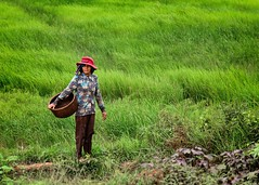 Red Hat (Trent's Pics) Tags: red hat cambodia fields farmer ricefields fieldworker kompongthom