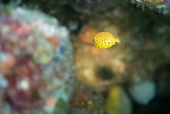 DSC_8142.jpg (d3_plus) Tags: sea sky fish bea