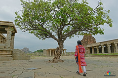 """THE TREE OF LIFE"" (GOPAN G. NAIR [ GOPS Creativ ]) Tags: tree tourism temple photography karnataka hampi gops vittala gopan gopsorg gopangnair gopsphotography"