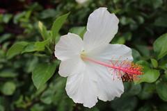 IMG_0228 (Psalm 19:1 Photography) Tags: hawaii oahu diamond head polynesian cultural center waikiki haleiwa laie waimea valley falls