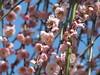 Paris (walking.biking.japan) Tags: shrine plumblossoms flowers paris