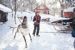 IMG_2751 (F@bione©) Tags: lapponia lapland marzo 2017 husky aurora boreale northenlight circolo polare artico rovagnemi finalndia finland