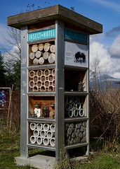 A former phone booth finds a new life as an 'Insect Hotel' (planted city) Tags: vancouver city garden design insects bees masonbees bc britishcolumbia westcoast canada gardening pollination nature ecosystems sustainability green upcycling phonebooth recycling tech food health