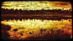 Turtle Pond (craig_schenk) Tags: iphone iphone5s iphoneography mextures snapseed texture textureoverlays colorburn colo colors colour colours art abstract fineart landscape lake pond water freshwater artistic