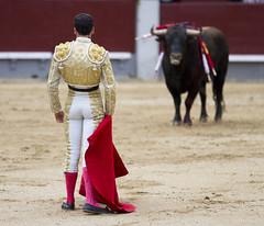 Faceoff (San Diego Shooter) Tags: madrid spain europe bokeh bull bullfight bullfighting matador torero lasventas torobravo thepinnaclehof nathanrupert2014spainwithbull tphofweek260 nathanbest2014