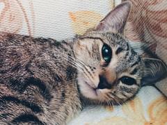 Kowa! (Kris *) Tags: light verde green luz animal cat eyes ojos gato kowa iphone 2014 5s xkrysx