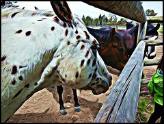 stable in Sun River OR by BeFunky.com (LarrynJill) Tags: horses animals oregon fence pasture sunriver evie photoeffects befunky befunkycom