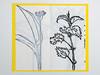 Odine Lang - Herbarium 2