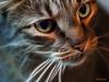 Mocha a la Fractalius (gtncats) Tags: pet cat tabby autofocus fractalius felinefaces photographyforrecreation frameitlevel1 infinitexposure