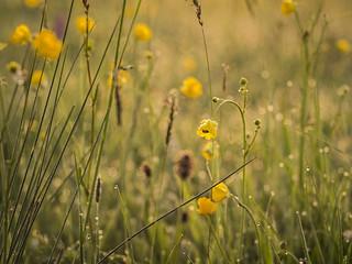 Meadow Bliss