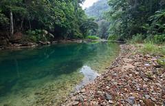 Bladen River 1 (Xuberant Noodle) Tags: forest river stream belize jungle bladen