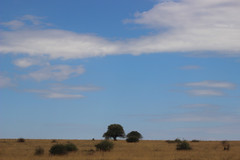 LANDSCAPE, NAIROBI GAME PARK, KENYA 2014 (nordique72) Tags: animals landscape kenya nairobi lion zebra giraffe baboon wildebeast eland waterbuffalo warthog gamepark whiterhinoceros egyptiangoose osterich masaigiraffe ngonghills acaciatree thompsonsgazelle velvetmonkey crownbird animalsofkenya hardebeast maracoustork
