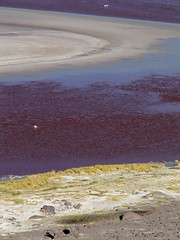 Sud Lipez (Micheline Canal) Tags: lagune montagne couleur oiseaux bolivie amriquedusud